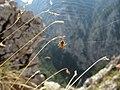 Wachthüttelkamm - Araneus.jpg