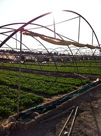 Farm in Wafrah