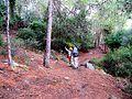 Walking Forest on the historical road in Gocek-Dalaman bays. - panoramio.jpg