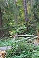 Wapta Falls Trail IMG 4945.JPG