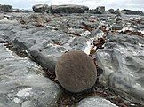 Spherical concretion on Ward Beach