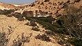 Water in the Dessert, Revivim Creek, Negev Desert, Israel מים במדבר, נחל רביבים - panoramio.jpg