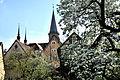Weikersheim, ein Blütentraum.jpg