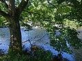 Weir on the River Derwent - geograph.org.uk - 449958.jpg