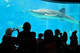Whale Watching at the Osaka Aquarium.jpg