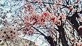 White Flora (250729491).jpeg