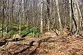 Wien-Ottakring -Naturdenkmal 90 - Wolfsgraben I.jpg