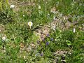 Wildflower garden - Flickr - brewbooks.jpg