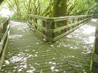 Wildwood Recreation Site - Fork in the boardwalk on the wetland walk