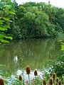 Willow - panoramio (4).jpg