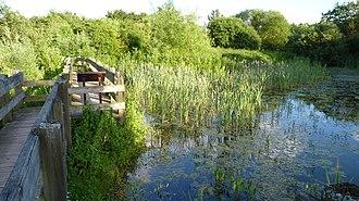 Winnersh - Bridge over a pond at Winnersh Meadows