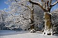 Winter scene in ABT garden with sweet chestnut tree and a table tennis equipment for sport - panoramio.jpg