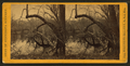 Woods near a river, by Whitney's Gallery.png