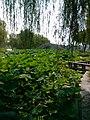 Wuzhong, Suzhou, Jiangsu, China - panoramio (258).jpg