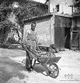 """Z """"barelo"""" (samokolnico) za pranje gre po seno, Staro selo 1951.jpg"""