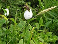 """Cuckoo's Spittle"" - geograph.org.uk - 1377055.jpg"