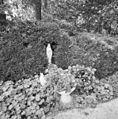 """Lourdesgrot"" in de tuin - Breda - 20335839 - RCE.jpg"