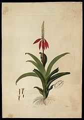 (Flora brasileira sem identificação)