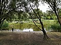 Łęgi Dębińsie, Poznań, staw (pond).jpg