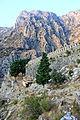 Ścieżka do Twierdzy Świętego Jana w Kotorze 05.jpg