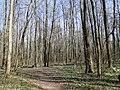 Апрель - panoramio (6).jpg