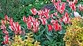 БотаническийСадCH30.jpg