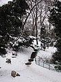 "Ботаничний сад ""Лесничка"" (зима) - panoramio.jpg"