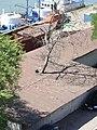 Дерево сквозь крышу. Ростов-на-Дону. Июль 2007 - panoramio.jpg