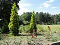 Дніпропетровський ботанічний сад 01.JPG