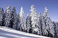 Зима е ... (Боровец 01.01.2016) - panoramio (2).jpg