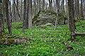 """Килим весняних квітів та камені в урочищі """"Зіньків камінь"""".jpg"""