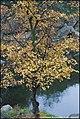 Корсунь-Шевченківський, осінь 11.jpg