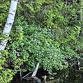 Озеро Глубелька, Голубые озера 03.jpg