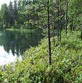 Озеро Голубое - panoramio.jpg