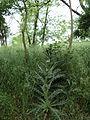 Парк шума Гази Баба во мај (159).JPG