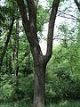 Парк шума Гази Баба во мај (21).JPG