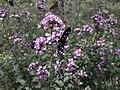 Проширење НП Сутјеска - биљни и животињски свијет 04.jpg