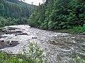 Ріка Чорний Черемош з прибережною смугою.Фото.JPG