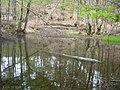Самево Езеро (Езерче) 05.jpg