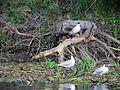 Чайки на берегу. - panoramio.jpg
