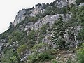 Ялтинський гірсько-лісовий природний заповідник (4).JPG
