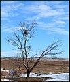 در آغوش برف - panoramio.jpg