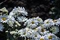عکس از گلها و گیاهان باغ بوتانیکال تفلیس - گرجستان 01.jpg