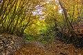 پاییزدر ایران-قاهان قم-Autumn in iran-qom 12.jpg