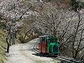 シグナス森林鉄道.JPG