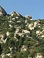 凤凰岭山路 - Road at the Phoenix Mountain - 2010.09 - panoramio.jpg