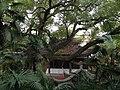 古樹 - panoramio.jpg