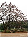小沟小路小村,龙泉湖,简阳市 JianYang, SiChuan 08-04-12 - panoramio.jpg
