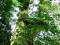 拉拉山國有林自然保育區 Lalashan Forest Reserve - panoramio.jpg