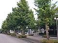 東京情報大学中央通りから本館方面を望む - panoramio.jpg